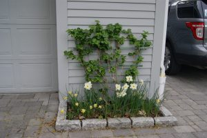 Great Curb Appeal Begins with a Plan and Some Professional Assistance!